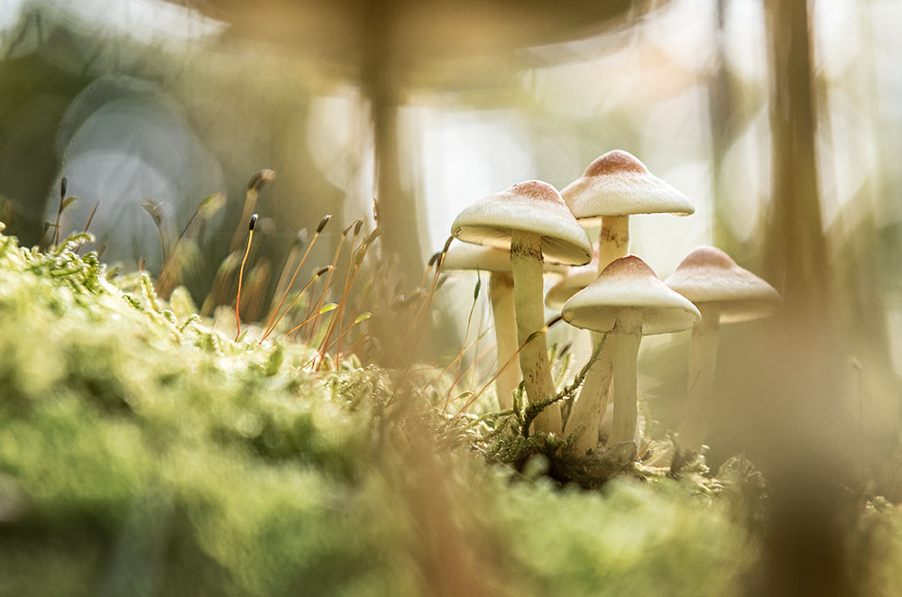 Pilze im herbstlichen Grunewald